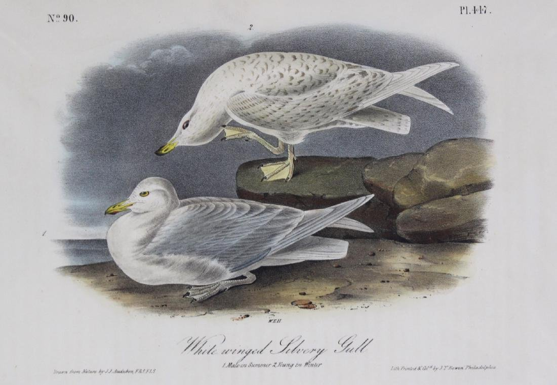J.J. Audubon. Octavo. White-Winged Silvery Gull - 2