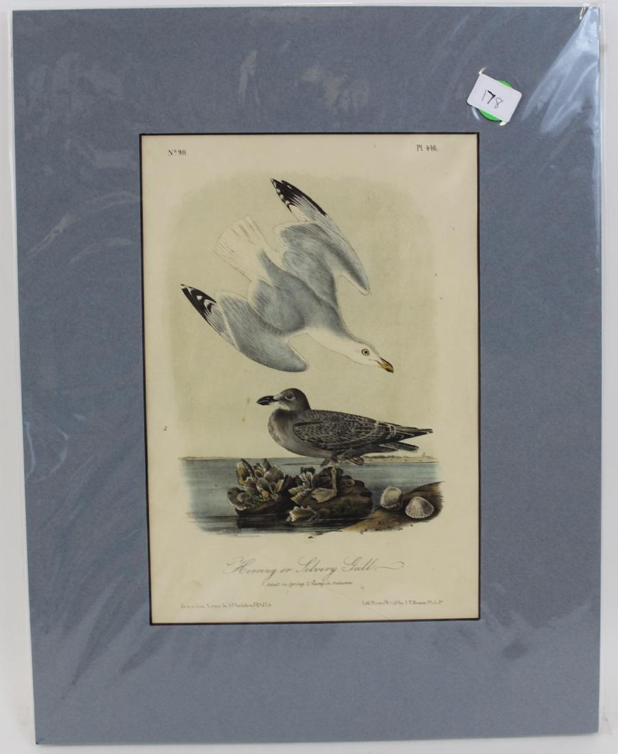 J.J. Audubon. Octavo. Herring or Silvery Gull