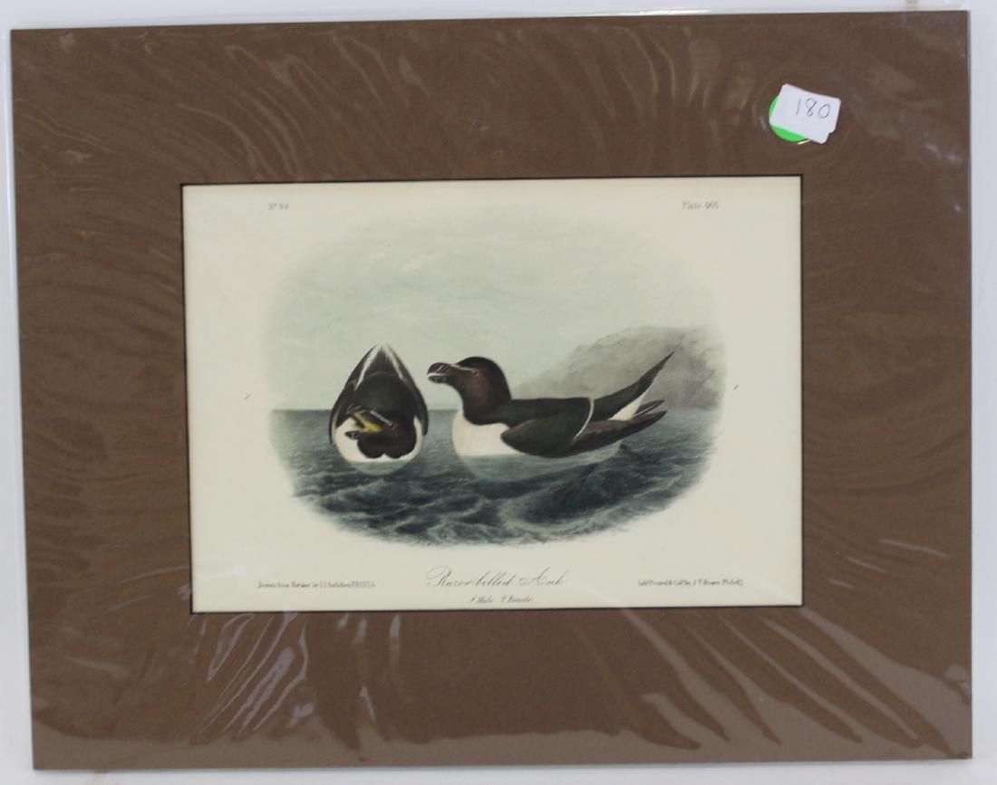 J.J. Audubon. Octavo. Razor Billed Auk