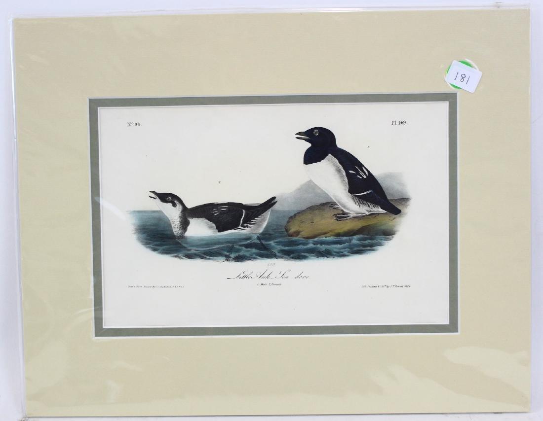 J.J. Audubon. Octavo. Little Auk Sea Dove