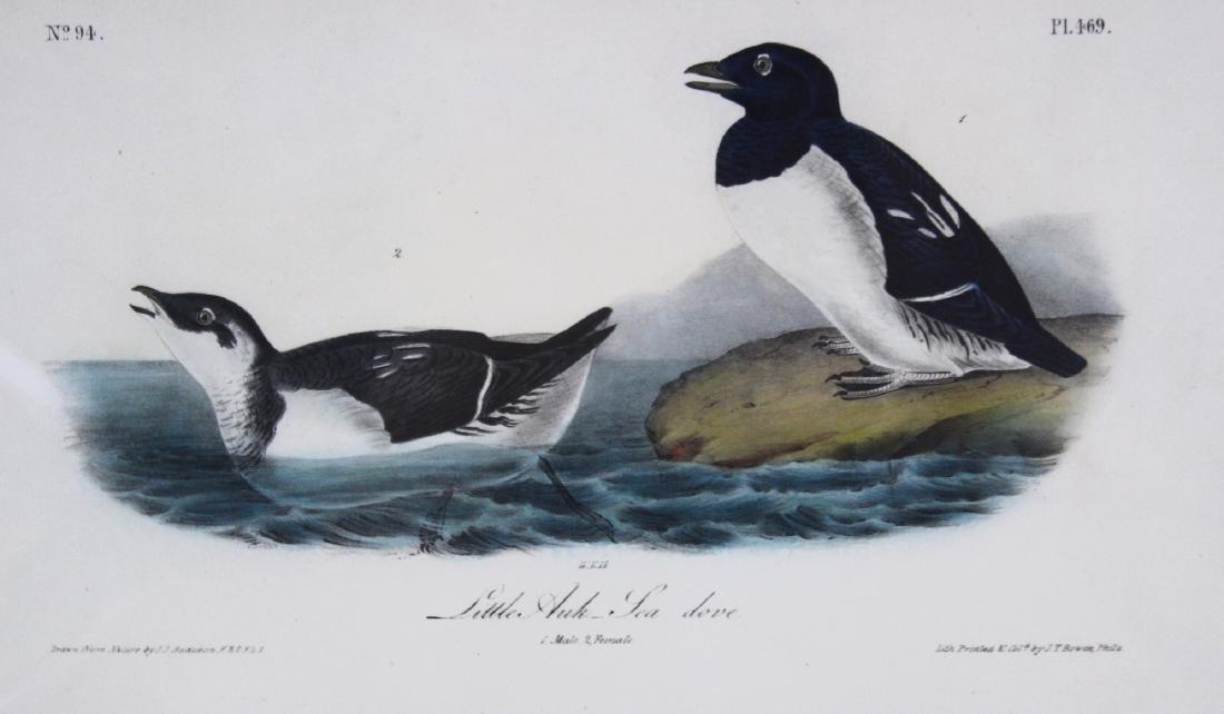 J.J. Audubon. Octavo. Little Auk Sea Dove - 2