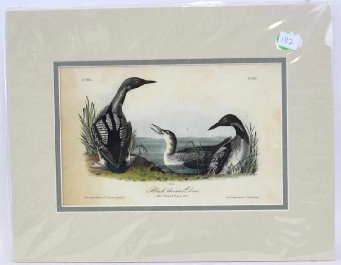J.J. Audubon. Octavo. Black Throated Diver