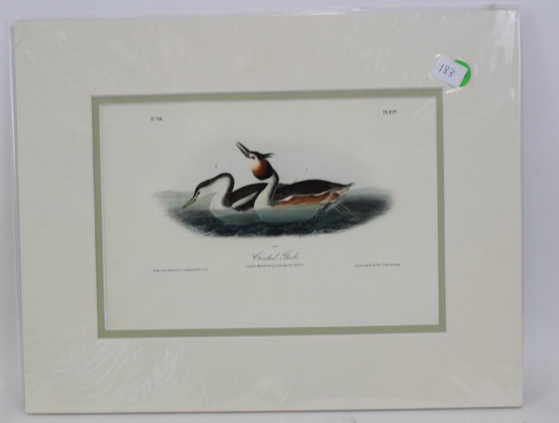 J.J. Audubon. Octavo. Crested Grebe