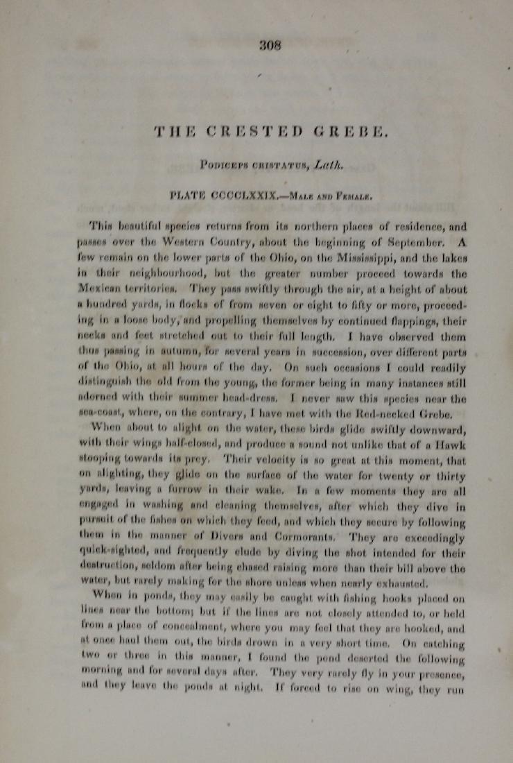 J.J. Audubon. Octavo. Crested Grebe - 3