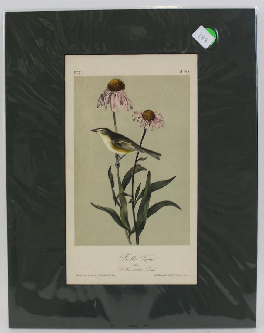 J.J. Audubon. Octavo. Bell Vireo