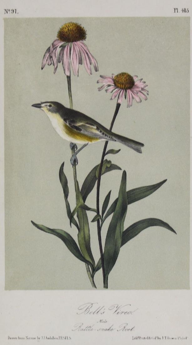 J.J. Audubon. Octavo. Bell Vireo - 2