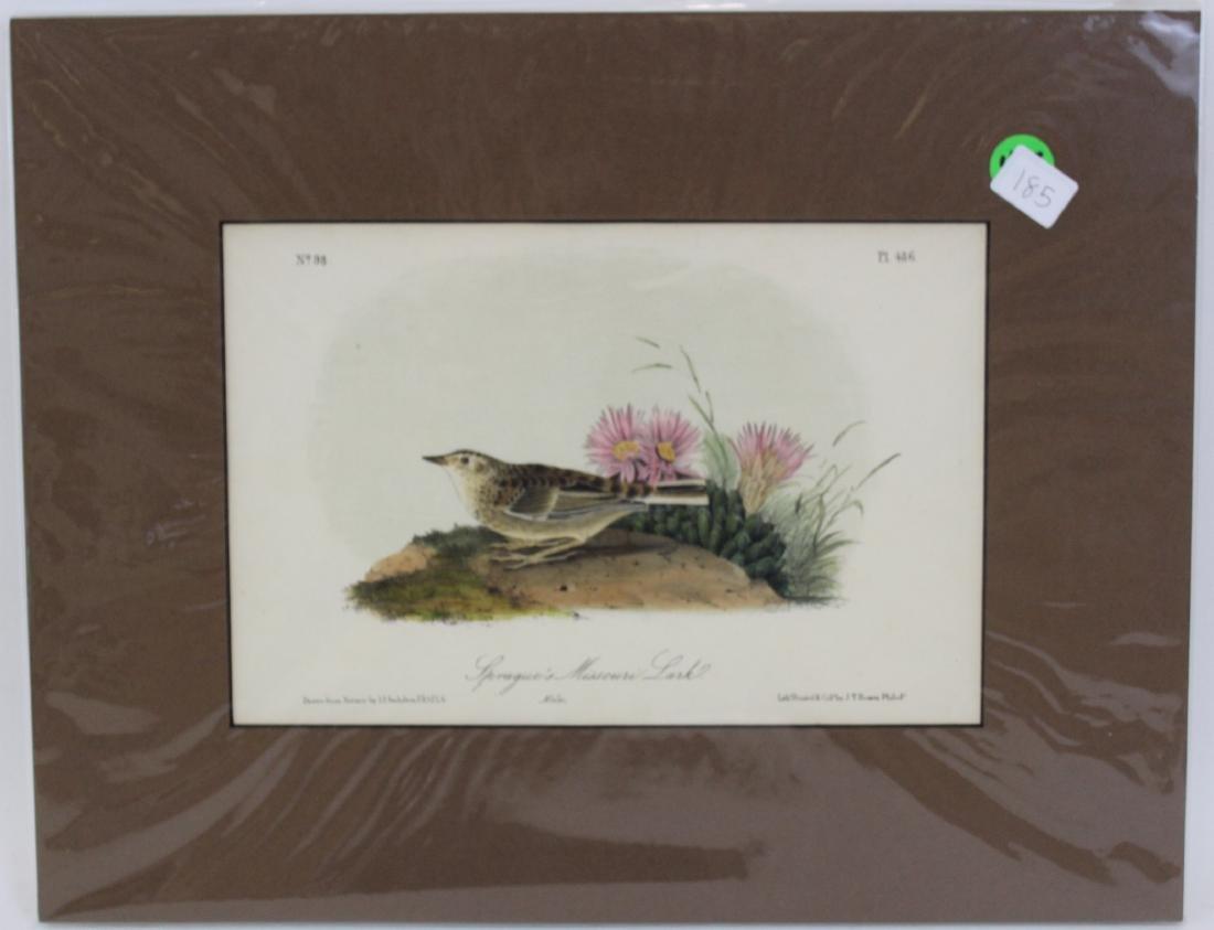 J.J. Audubon. Octavo. Sprague's Missouri Lark