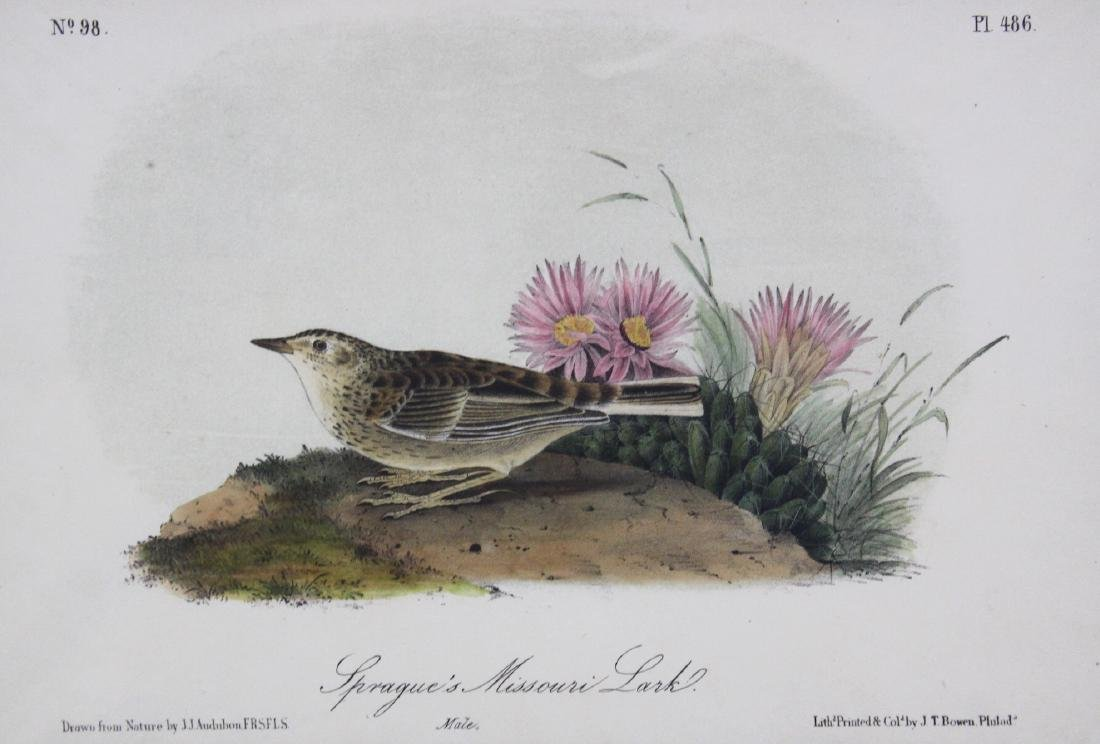 J.J. Audubon. Octavo. Sprague's Missouri Lark - 2
