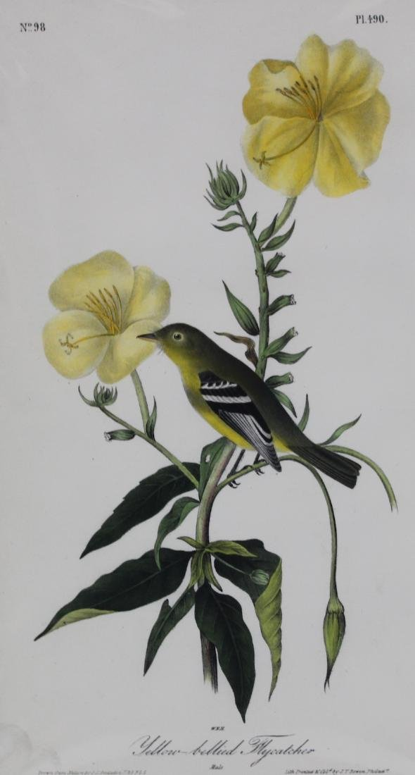 J.J. Audubon. Octavo. Yellow Bellied Flycatcher - 2