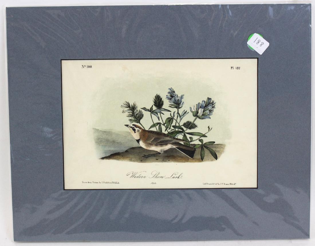 J.J. Audubon. Octavo. Western Shore Lark