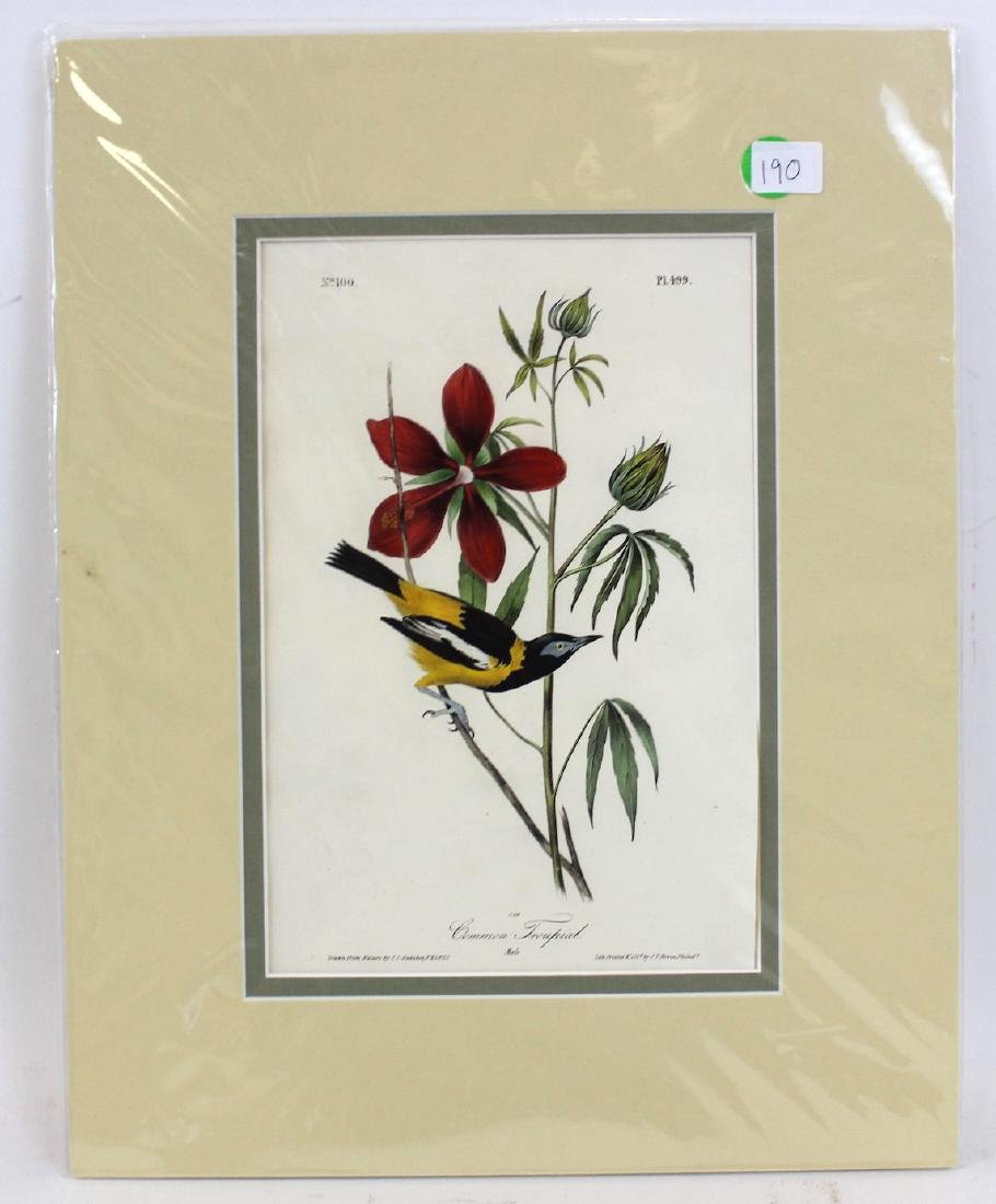J.J. Audubon. Octavo. Common Troupial