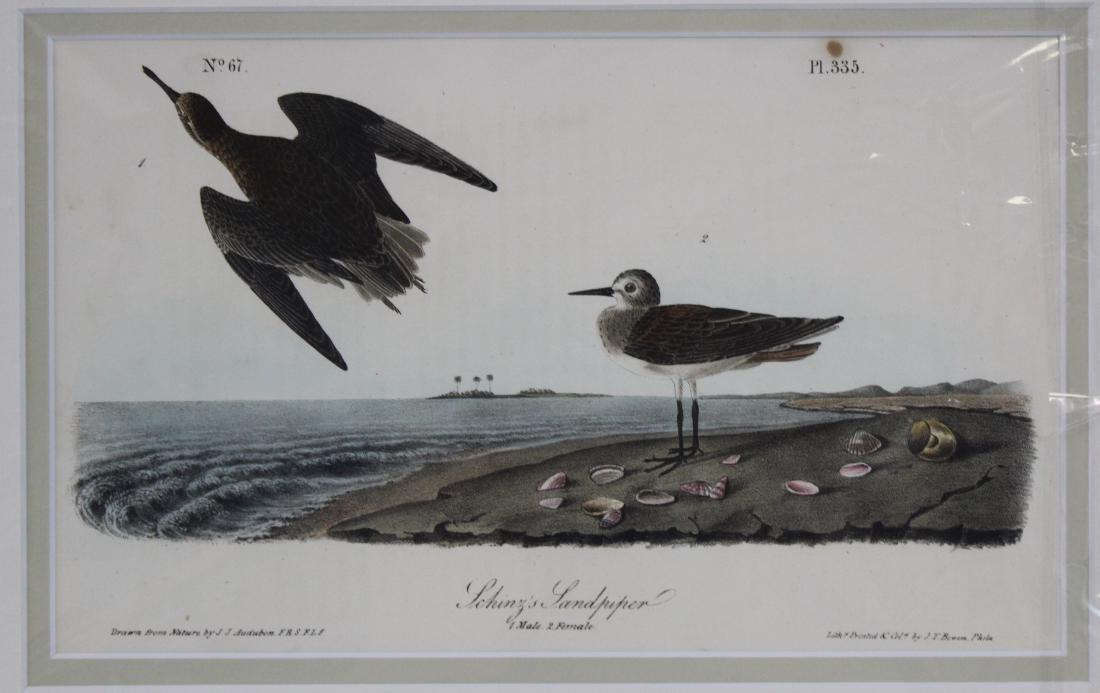 J.J. Audubon. Octavo. Schinz's Sandpiper