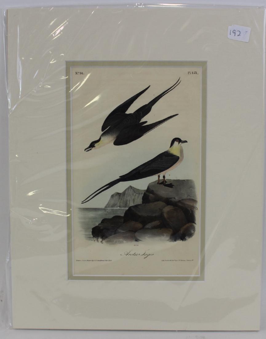 J.J. Audubon. Octavo. Arctic Jager