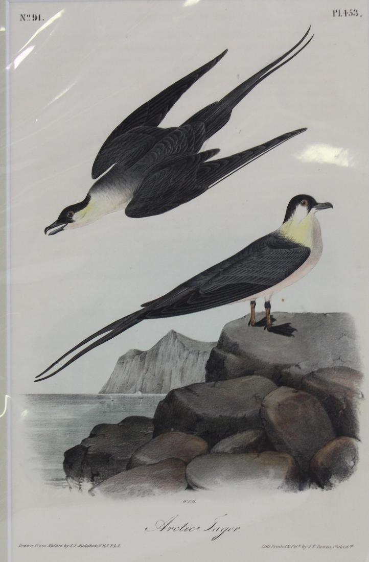 J.J. Audubon. Octavo. Arctic Jager - 2