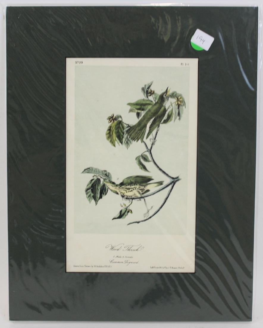 J.J. Audubon. Octavo. Wood Thrush