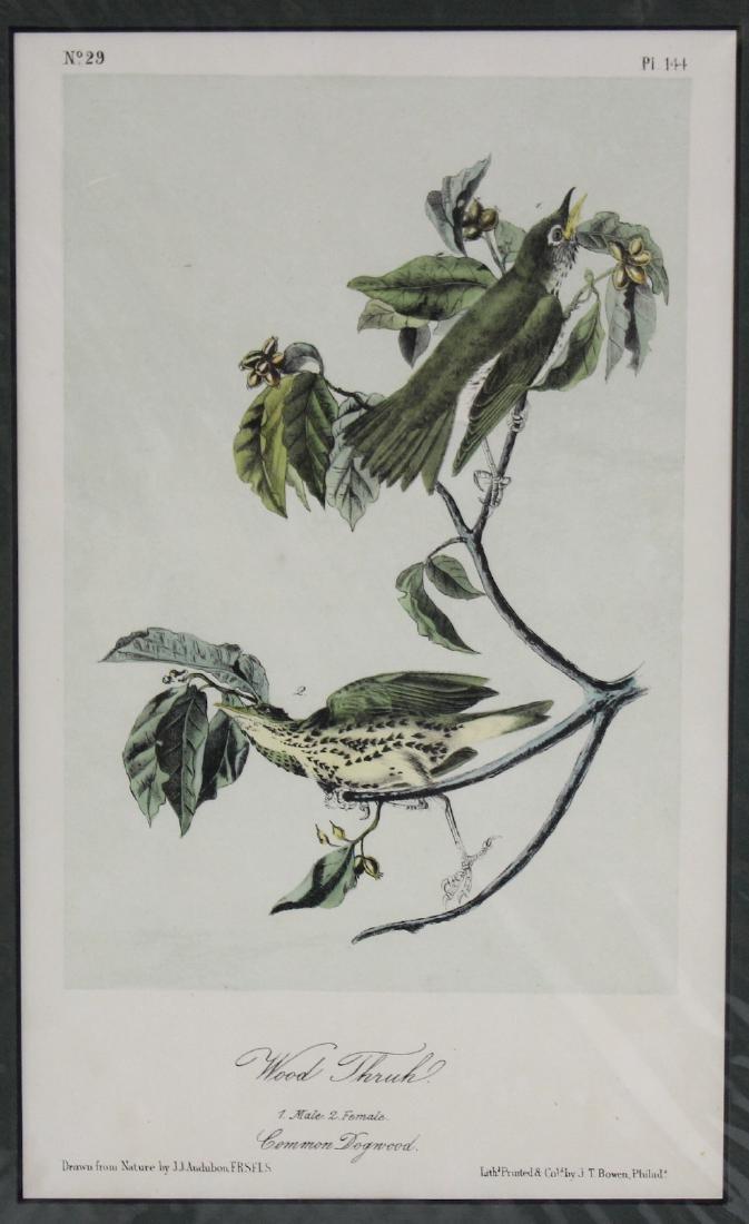J.J. Audubon. Octavo. Wood Thrush - 2