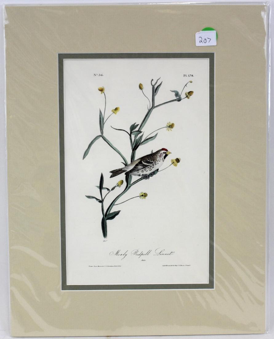 J.J. Audubon. Octavo. Mealy Red Poll Linnet
