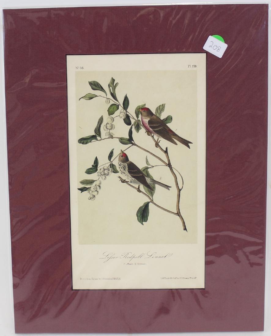 J.J. Audubon. Octavo. Lesser Redpoll Linnet