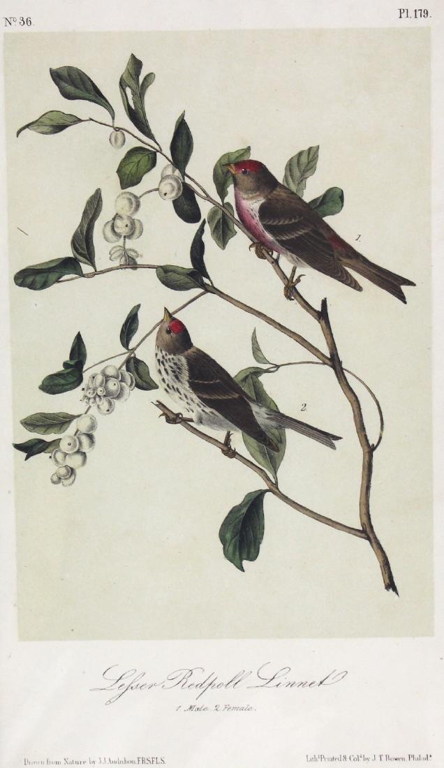 J.J. Audubon. Octavo. Lesser Redpoll Linnet - 2