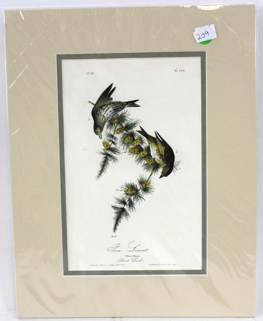 J.J. Audubon. Octavo. Pine Linnet