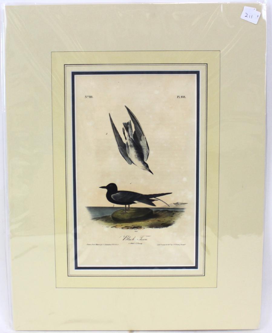 J.J. Audubon. Octavo. Black Tern