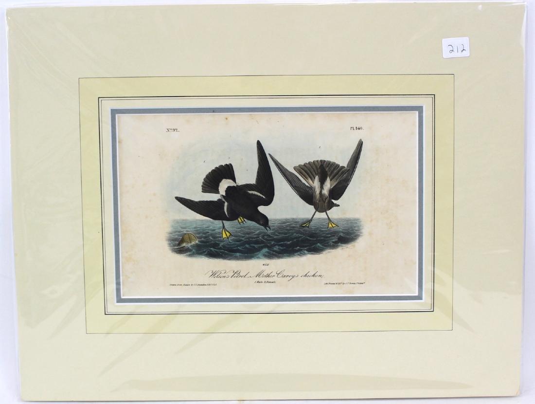 J.J. Audubon. Octavo. Wils Petrel/Mother Carey Chicken