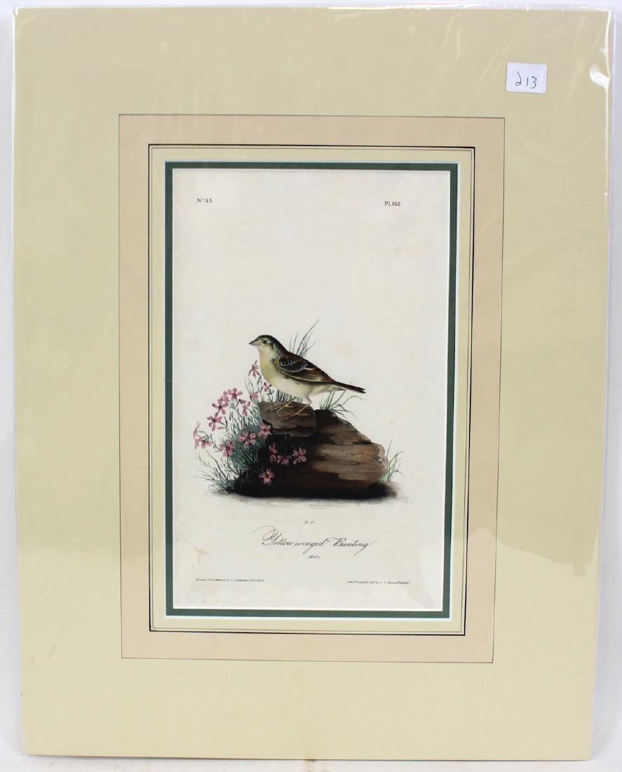 J.J. Audubon. Octavo. Yellow-Winged Bunting