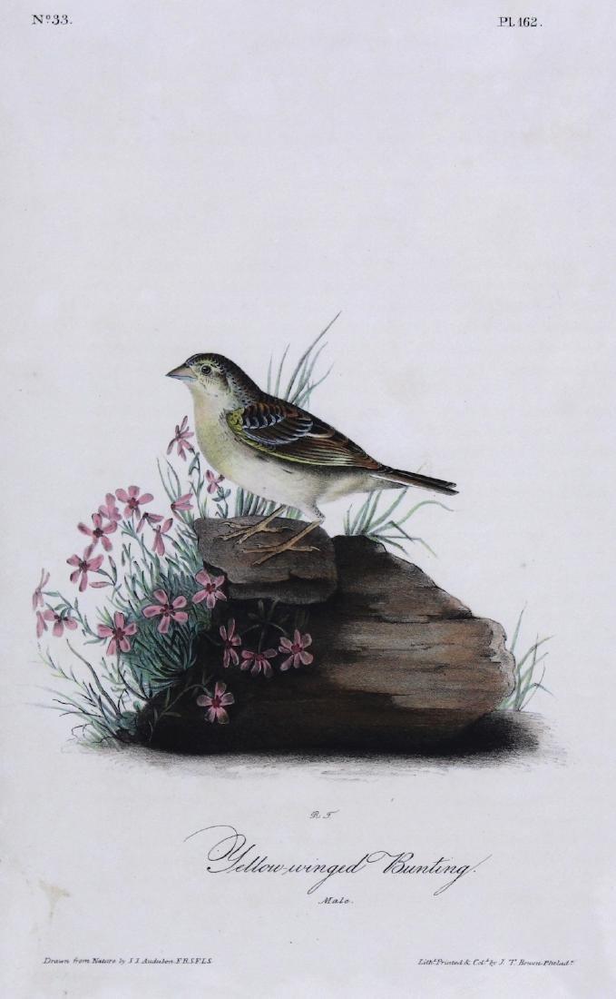 J.J. Audubon. Octavo. Yellow-Winged Bunting - 2