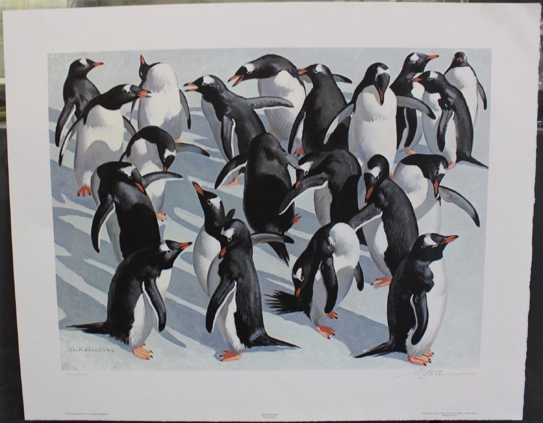 K. Shackleton. Ltd. Print.