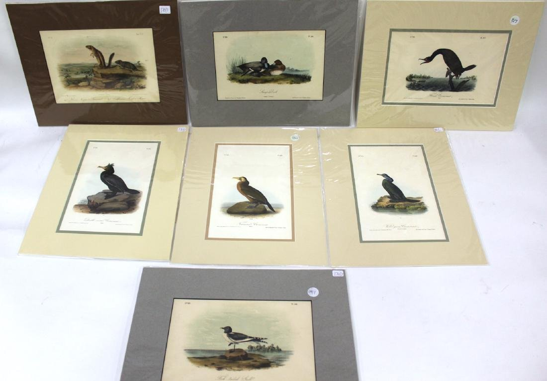 J. J. Audubon Original Aquatints (7)