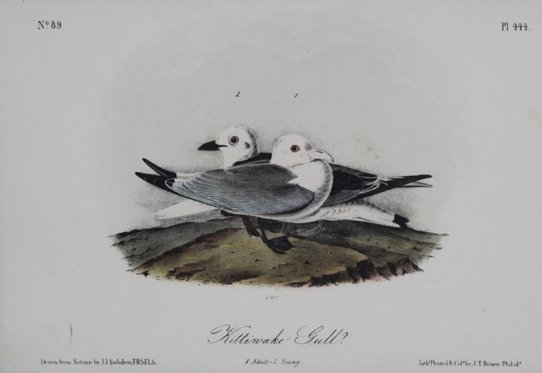J. J. Audubon Original Aquatints (7) - 2