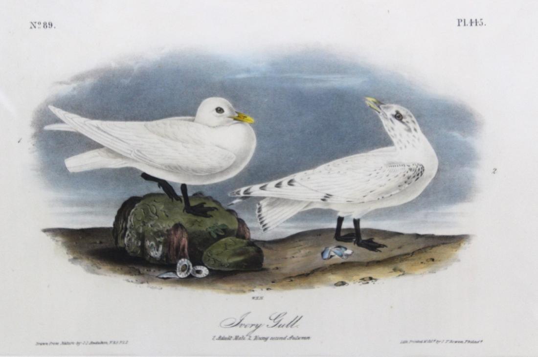 J. J. Audubon Original Aquatints (7) - 3
