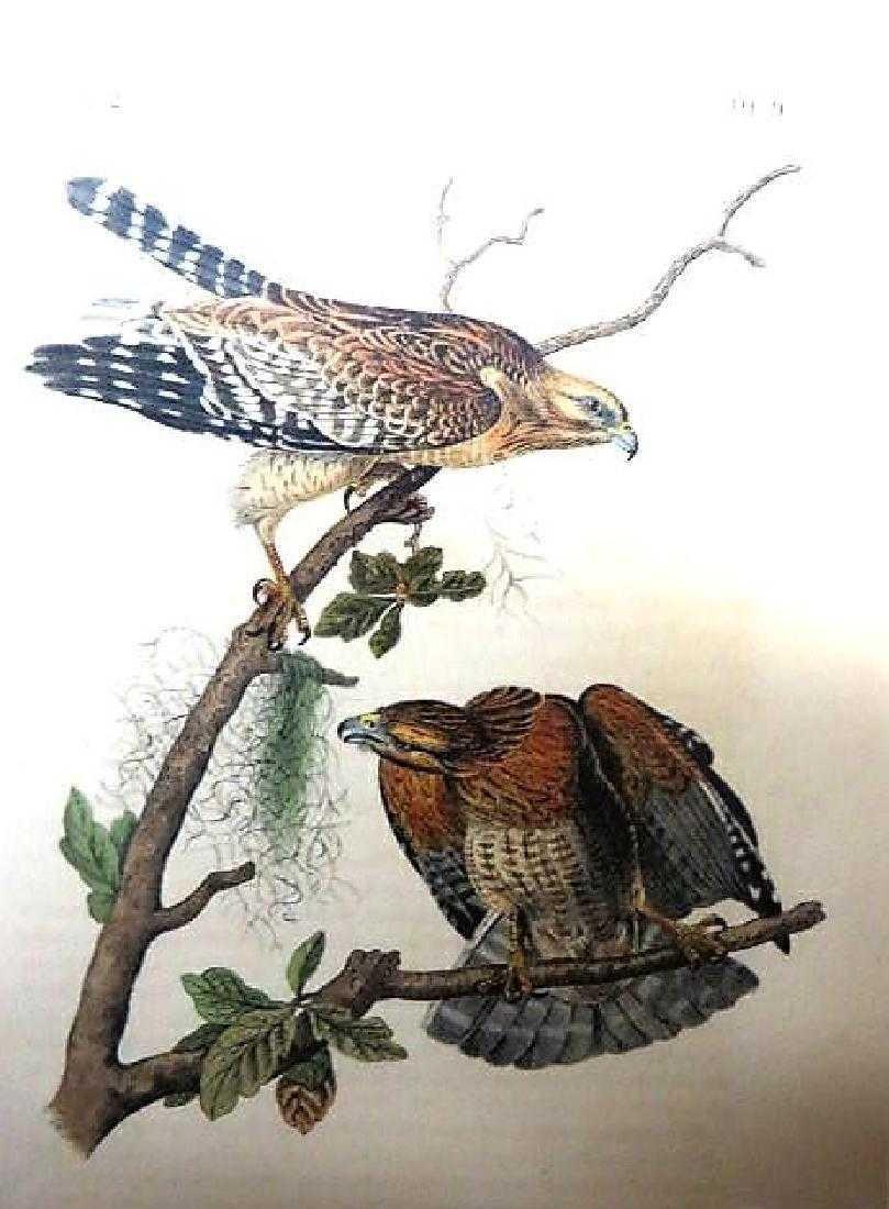 J.J. Audubon. Octavo. Red Shouldered Buzzard No.9