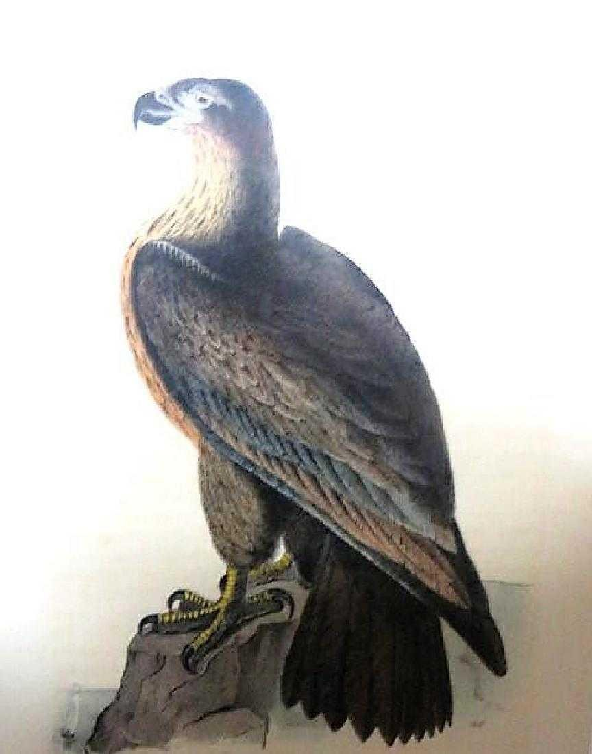 J.J. Audubon. Octavo. Washington Sea Eagle No.13