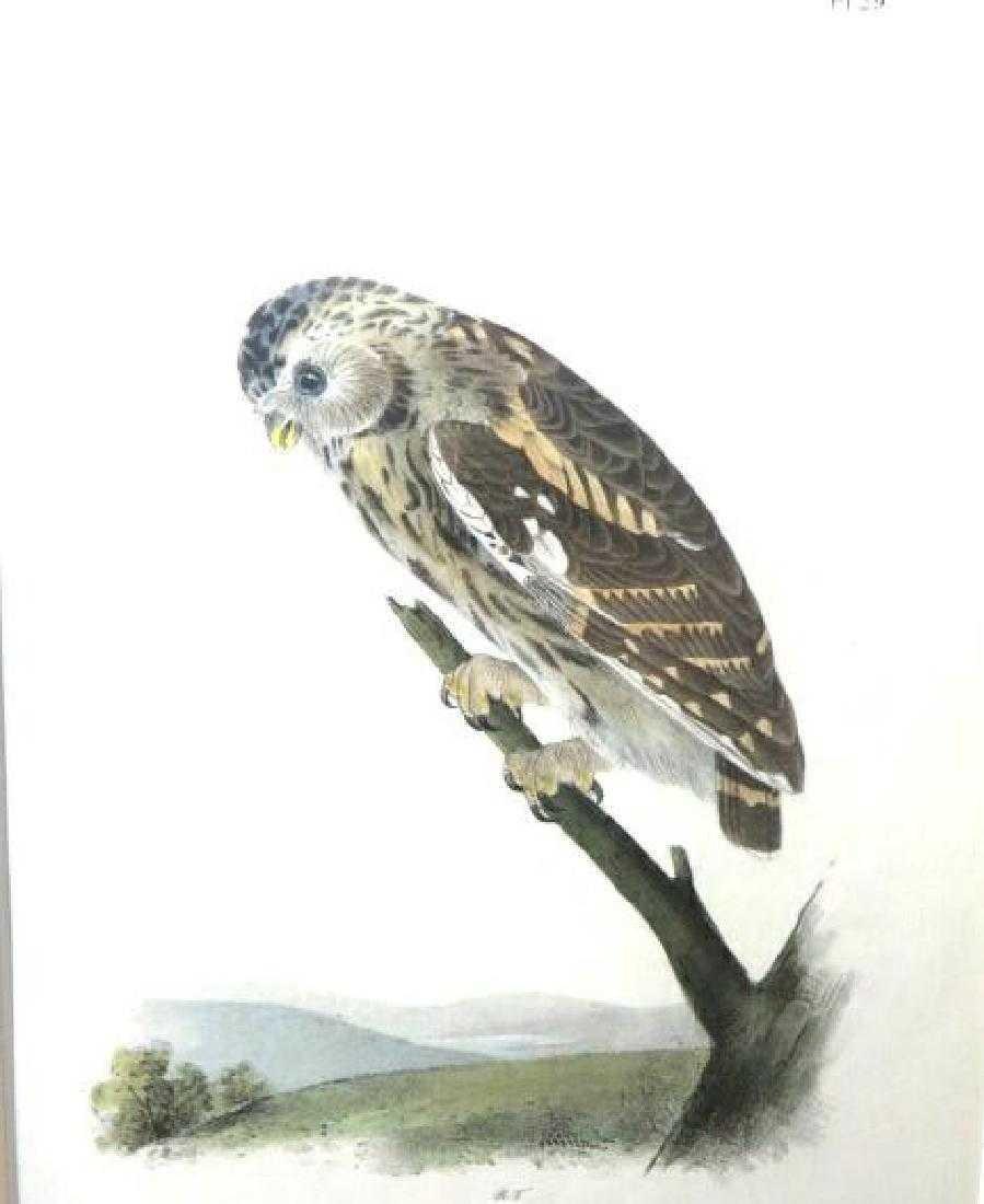 J.J. Audubon. Octavo. Little Night Owl No.29