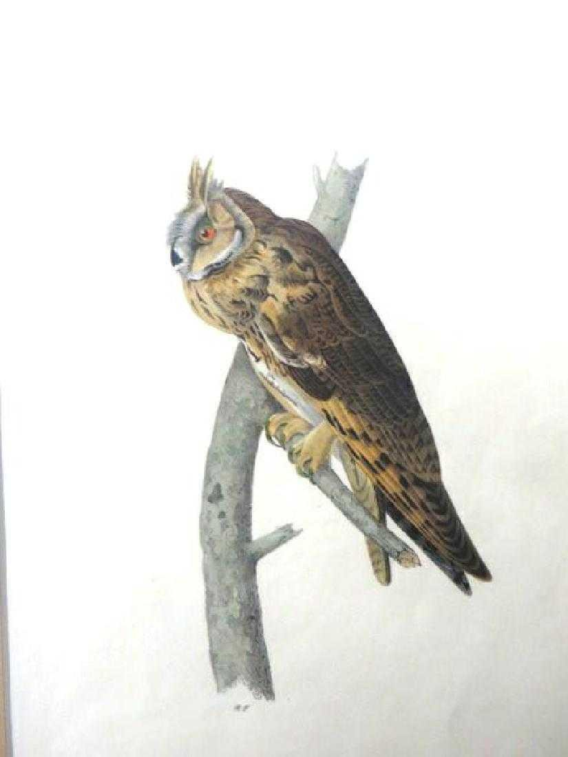 J.J. Audubon. Octavo. Long-Eared Owl No.37