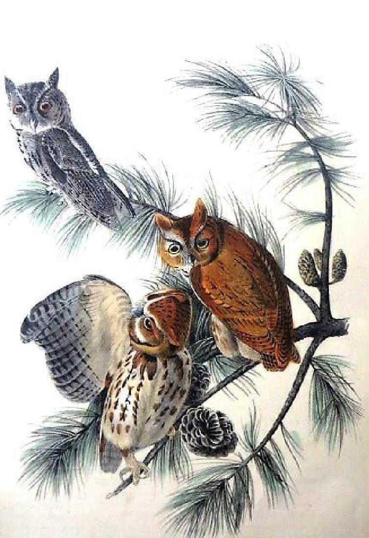 J.J. Audubon. Octavo. Little Screech Owl No.40