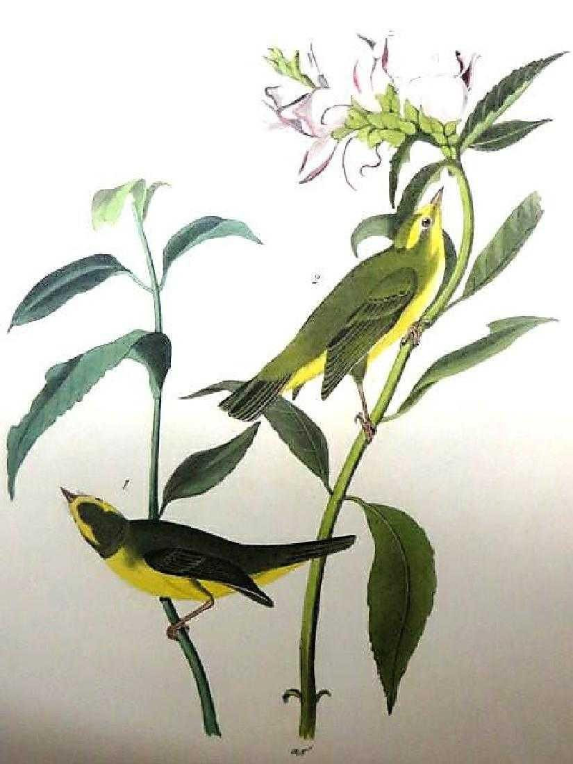 J.J. Audubon. Octavo. Wilson's Flycatching Warbler
