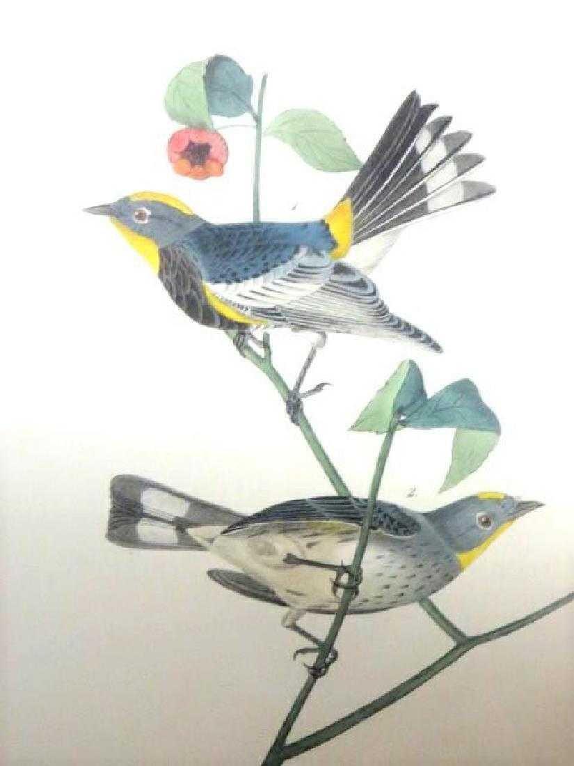 J.J. Audubon. Octavo. Audubon's Wood Warbler No.77