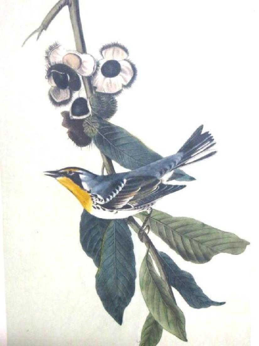 J.J. Audubon. Octavo. Yellow Throated Wood Warbler