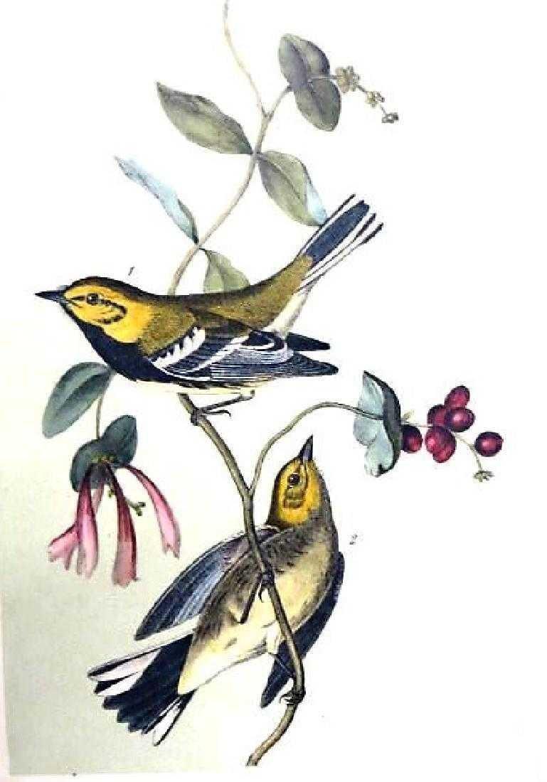 J.J. Audubon. Octavo. Black Throated Green Wood Warbler