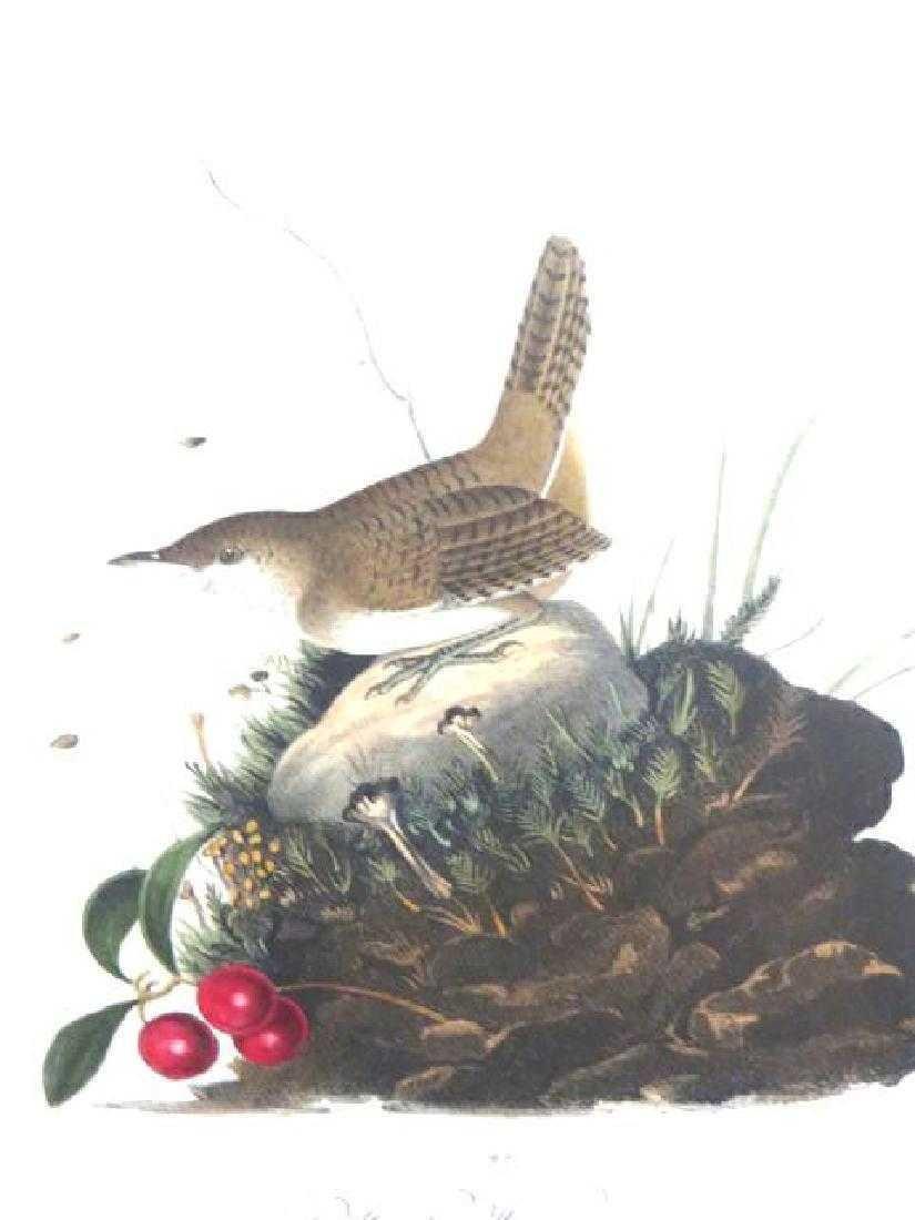 J.J. Audubon. Octavo. Wood Wren No.119