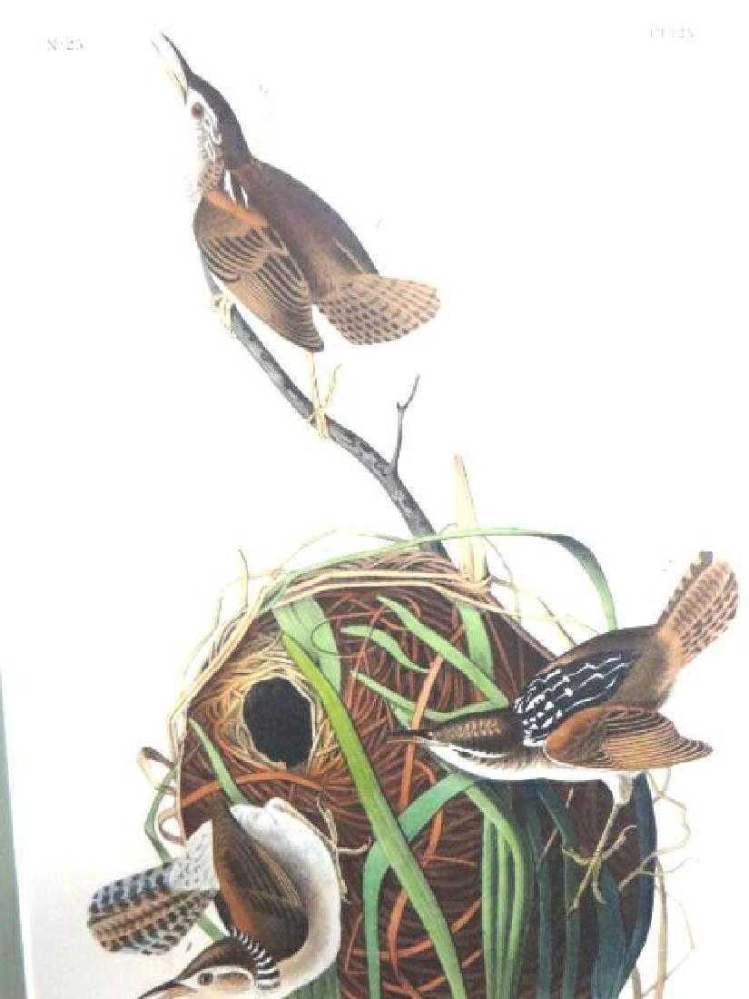 J.J. Audubon. Octavo. Marsh Wren No.123