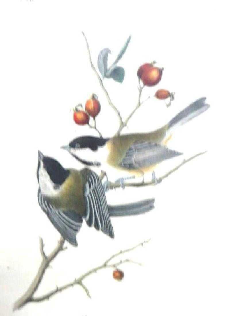 J.J. Audubon. Octavo. Black Cap Titmouse No.126