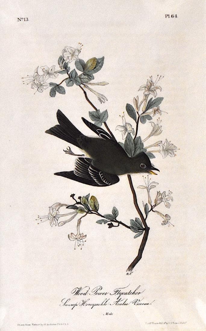 J.J. Audubon. Octavo. Wood Pewee Flycatcher No.64