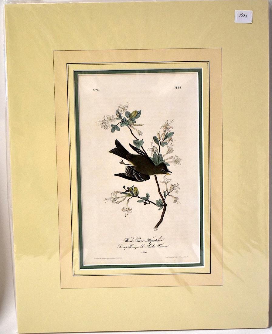 J.J. Audubon. Octavo. Wood Pewee Flycatcher No.64 - 2