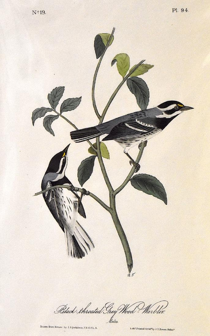 J.J. Audubon. Octavo. Black Throated Grey Wood Warbler