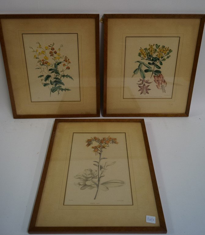 Botanical Floral Prints (3)