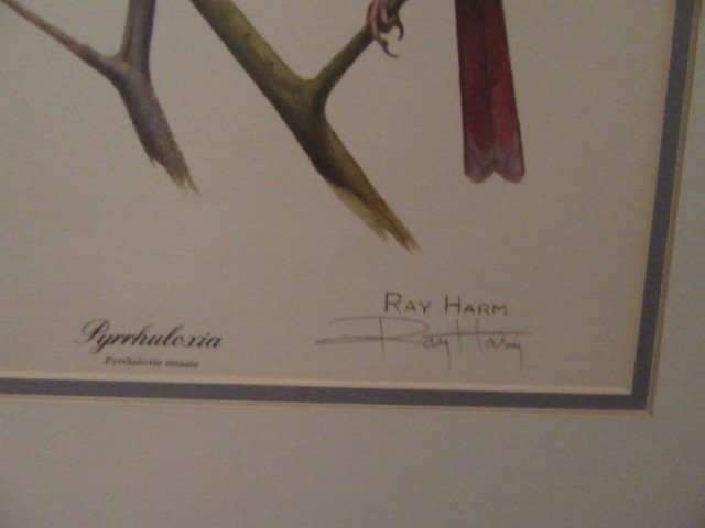 Ray Harm Bird Lithograph Signed - 4