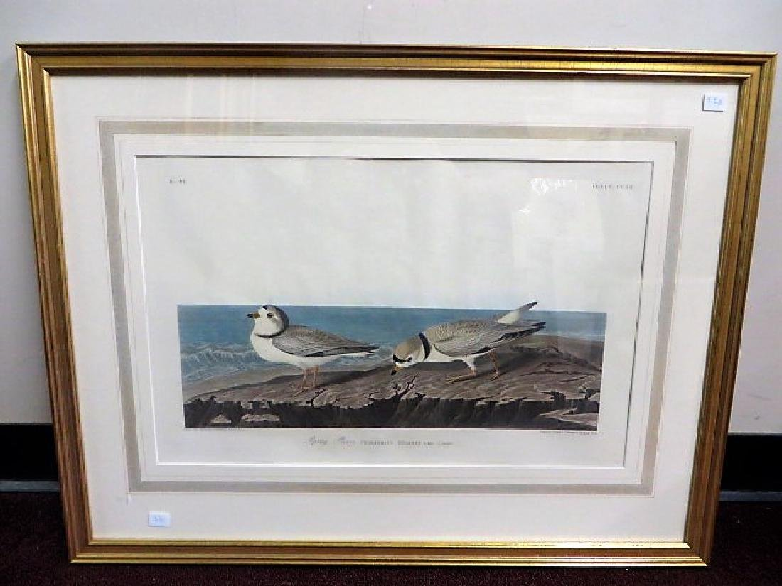 J. J. Audubon. Piping Plover. Plate 220